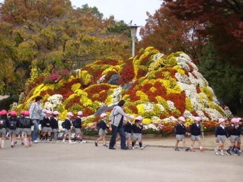 Chrysanthemum mountain
