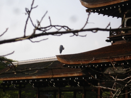 This bird followed me from the park in Osaka